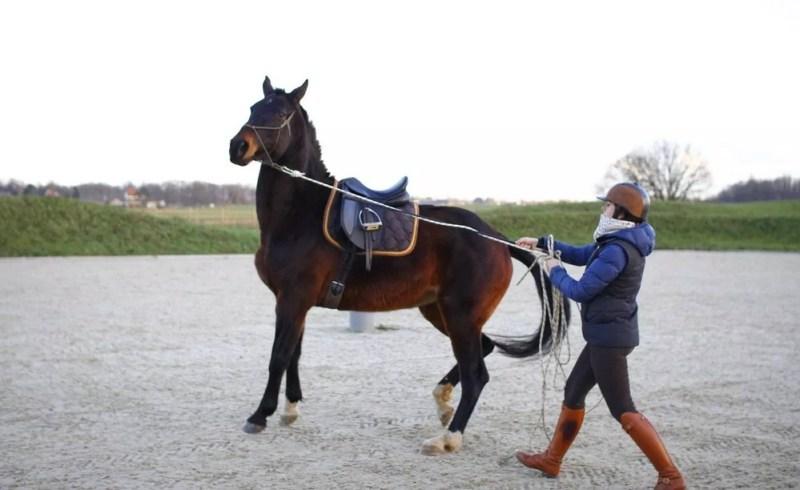 ww.pegasebuzz.com | The Tack Room, la formation en ligne des propriétaires de chevaux : gestion naturelle du cheval, bien-être et performance.