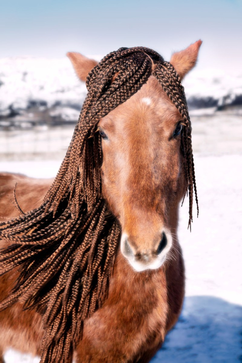 www.pegasebuzz.com   Equestrian photography : Gray Malin - Icelandic Horses.