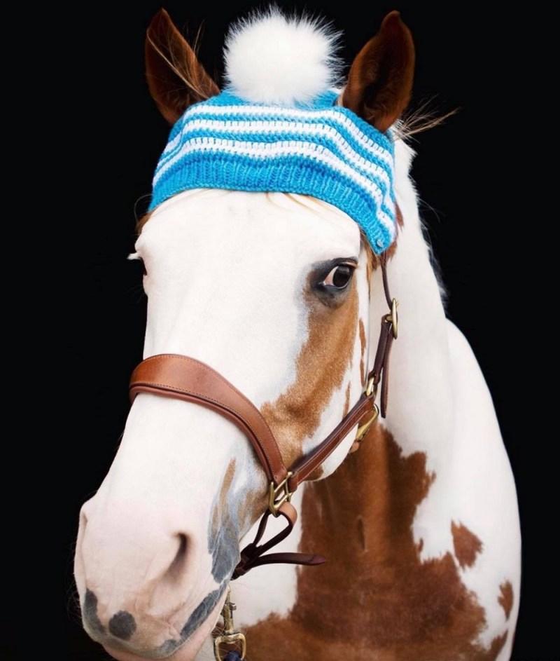 www.pegasebuzz.com | Pom pom toque for horses : Horse & Dog Show.