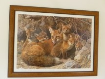 Fox painting, Muir's Tea Room, Sebastopol, California