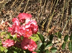 Flower and butterfly at Santa Rosa Junior College