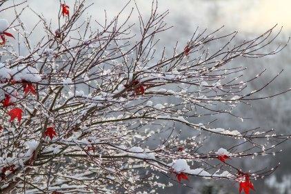 branches.steinar-engeland-156430