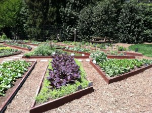 White House Kitchen Garden