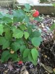 Morning photo of Strawberry Shortcake