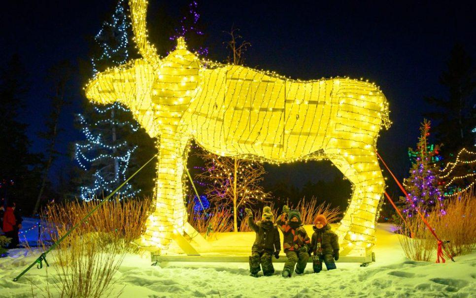Moose at Zoo Lights