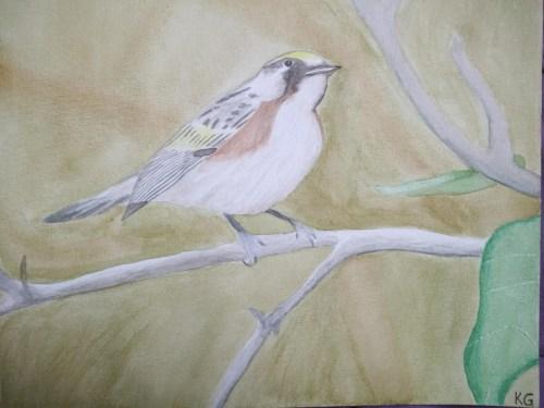 oiseau à l'aquarelle avec technique sèche et technique humide