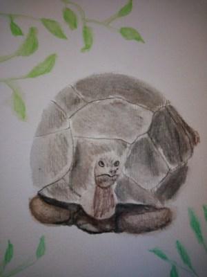 Croquis aquarellé de tortue