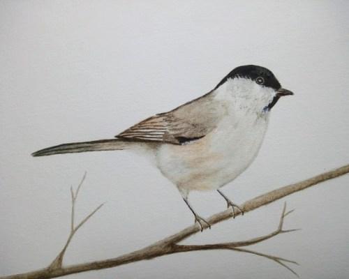 oiseau réaliste aquarelle