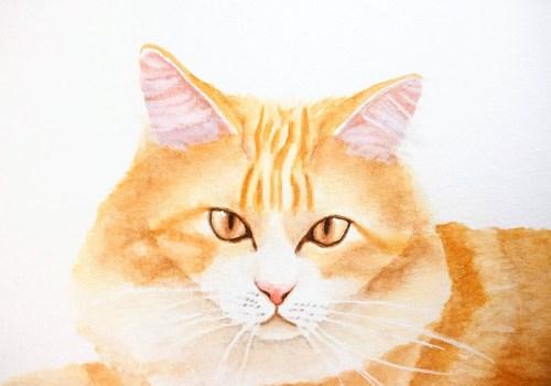 chat réaliste à l'aquarelle