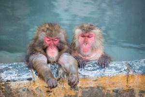 猿が会話をしているイメージ