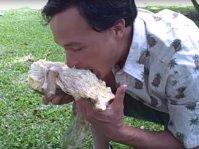 makan_sukun_mentah