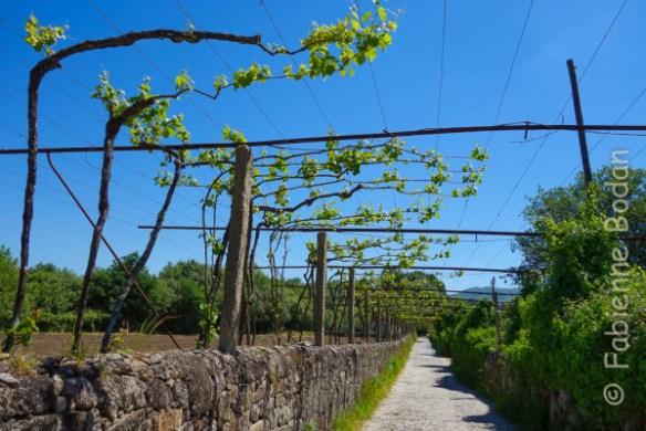 Paysage typique du chemin portugais, à partir de Barcelos. © Fabienne Bodan