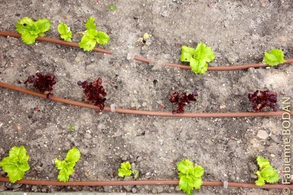 L'association des amis de Saint Jacques de Valladolid, qui gère l'auberge, a même créé un mini-potager qui alimentera les repas des pèlerins l'été. Dans le même esprit, des arbres fruitiers ont été plantés © Fabienne Bodan
