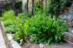 Albergue Gaucelmo de la Confraternity Saint James, Rabanal del Camino, Camino francés.  Les hospitaliers cultivent leurs herbes aromatiques. © Fabienne Bodan