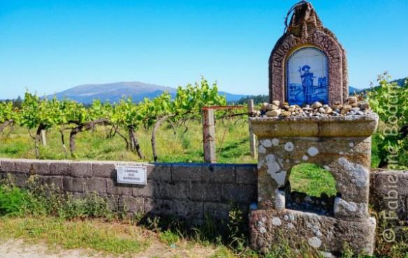 Saint Jacques des vignes suspendues...© Fabienne Bodan