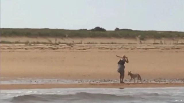 Coyote en la playa en Ptown