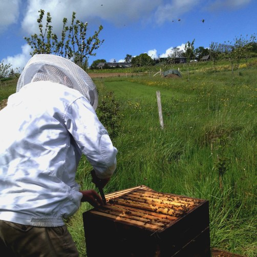 Bee first beekeeping