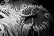 hrakleio_3_aquarium_knwssos_volta-425b-w