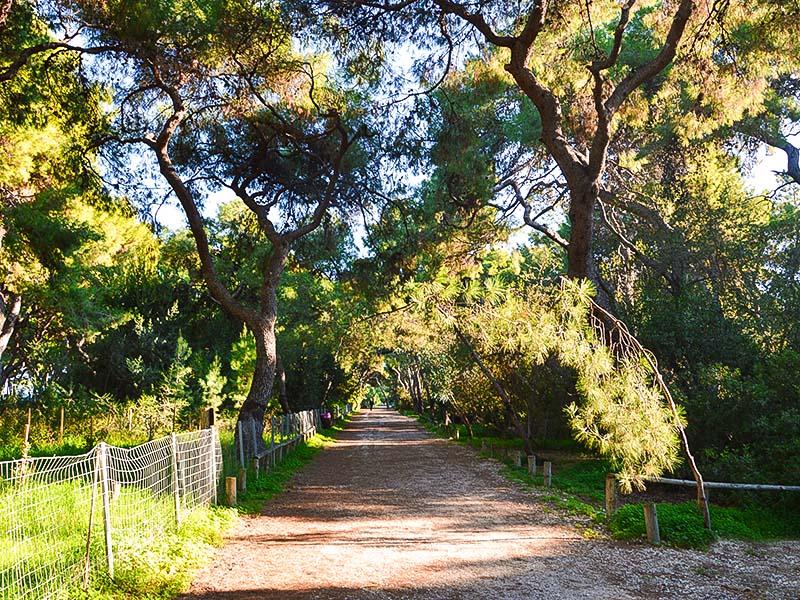 Δάσος Ξυλοκάστρου (Πευκιάς) | Πελοπόννησος Search