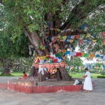 Body tree a Lumbini