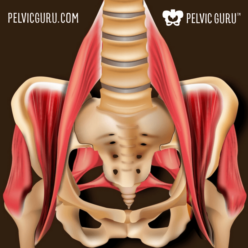 The Ultimate Pelvic Anatomy Resource | Pelvic Guru