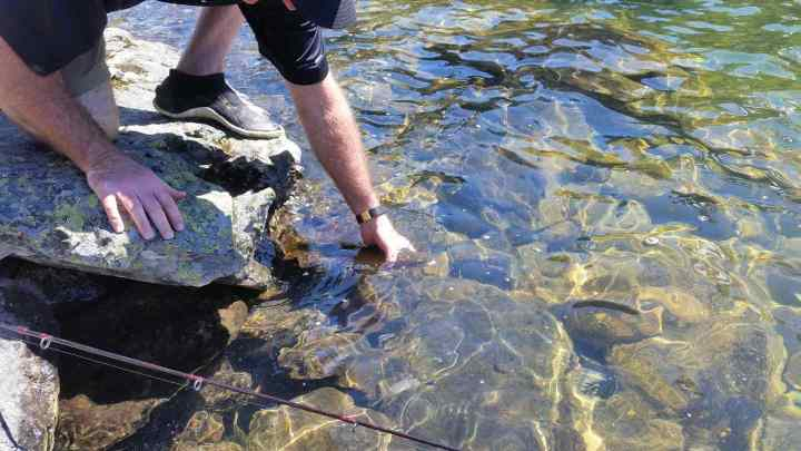 Catch and release fishing in an alpine lake