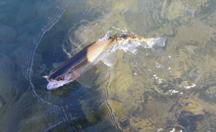 British Columbia Fly fishing trips