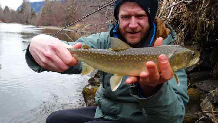 Bull Trout colorful dots