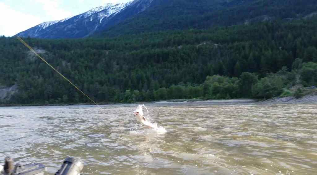 Sturgeon fishing trips in BC