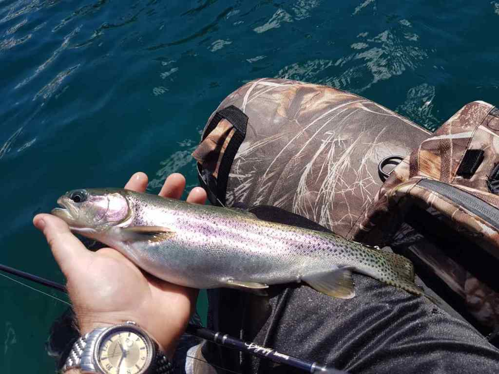Rainbow Trout fishing Alpine lakes in BC