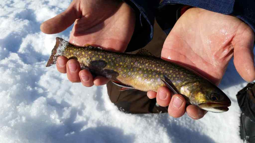 Ice fishing for Brook Trout close to Vancouver