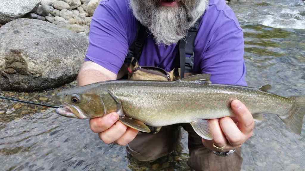 Best stream fly fishing in BC