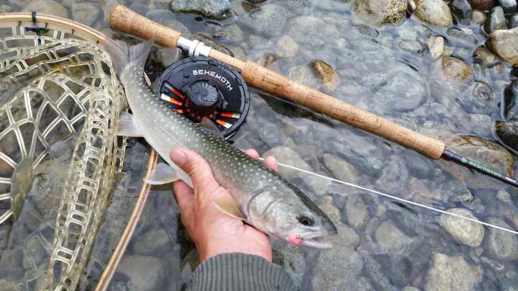 Bull Trout fly fishing in BC