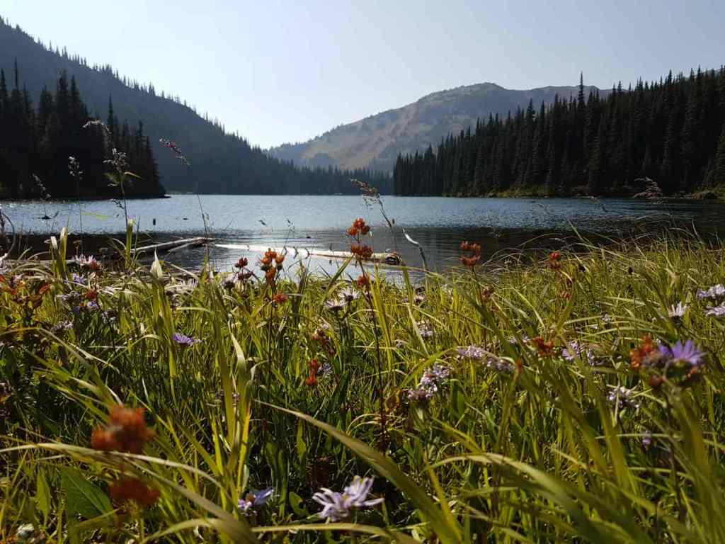 Meadow flowers at an alpine lake in BC