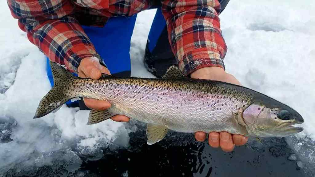 Ice fishing for Rainbow Trout in Whistler BC