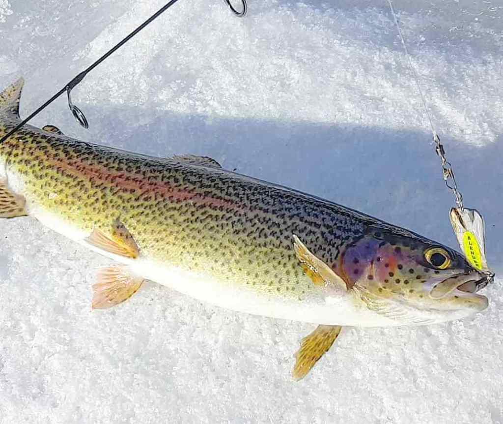 BC Ice fishing