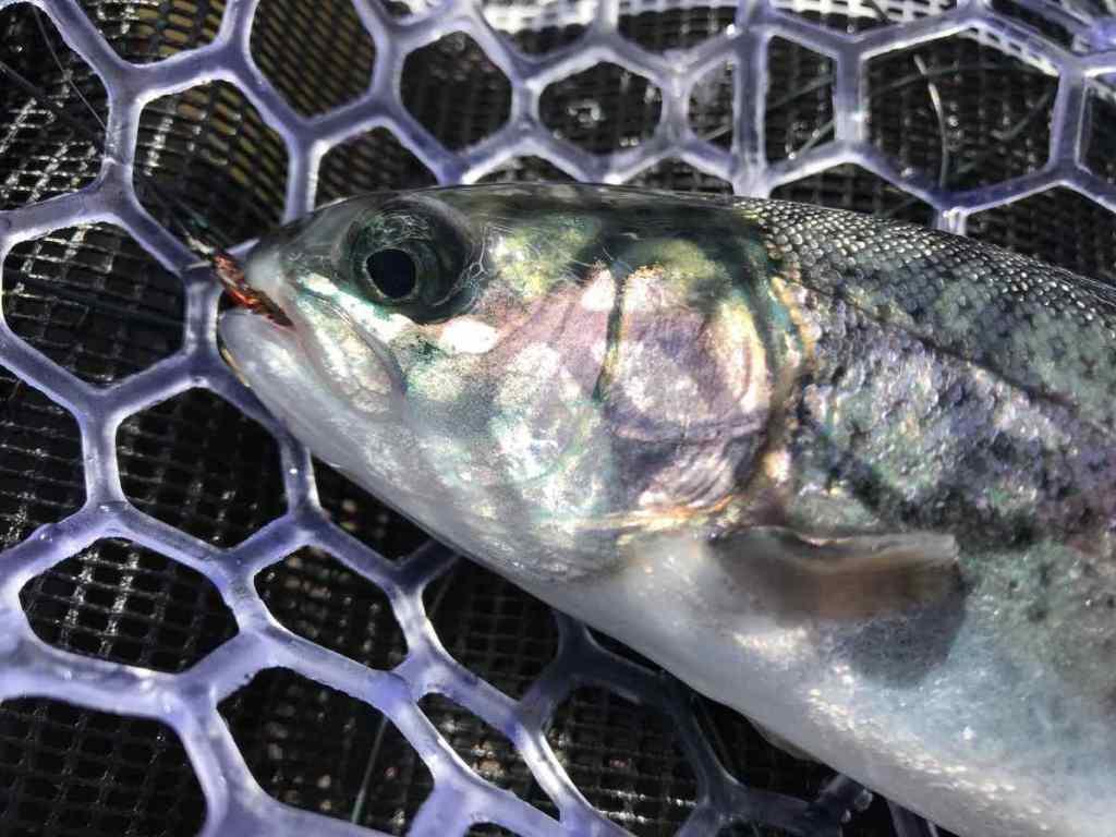 Starvation lake fishing in Squamish BC