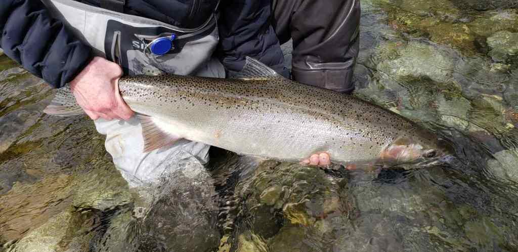 Steelhead fishing in Squamish BC