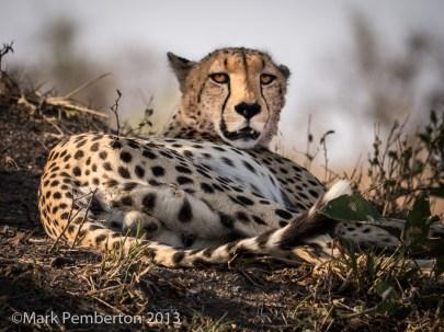 CheetahLondolozi