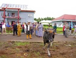 Pakai Dana Desa, Para Kades di Halbar Patungan Beli Hewan Kurban