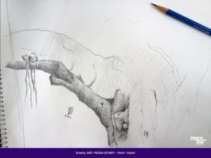 - A007 PACSOA Pencil 20130811 - A007-PACSOA-Pencil-20130811