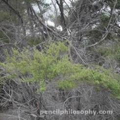 New Zealand bush photo