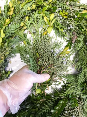 DIY Christmas wreath tutorial - to create your hand of greenery start with boxwood sprigs then layer cedar then some juniper