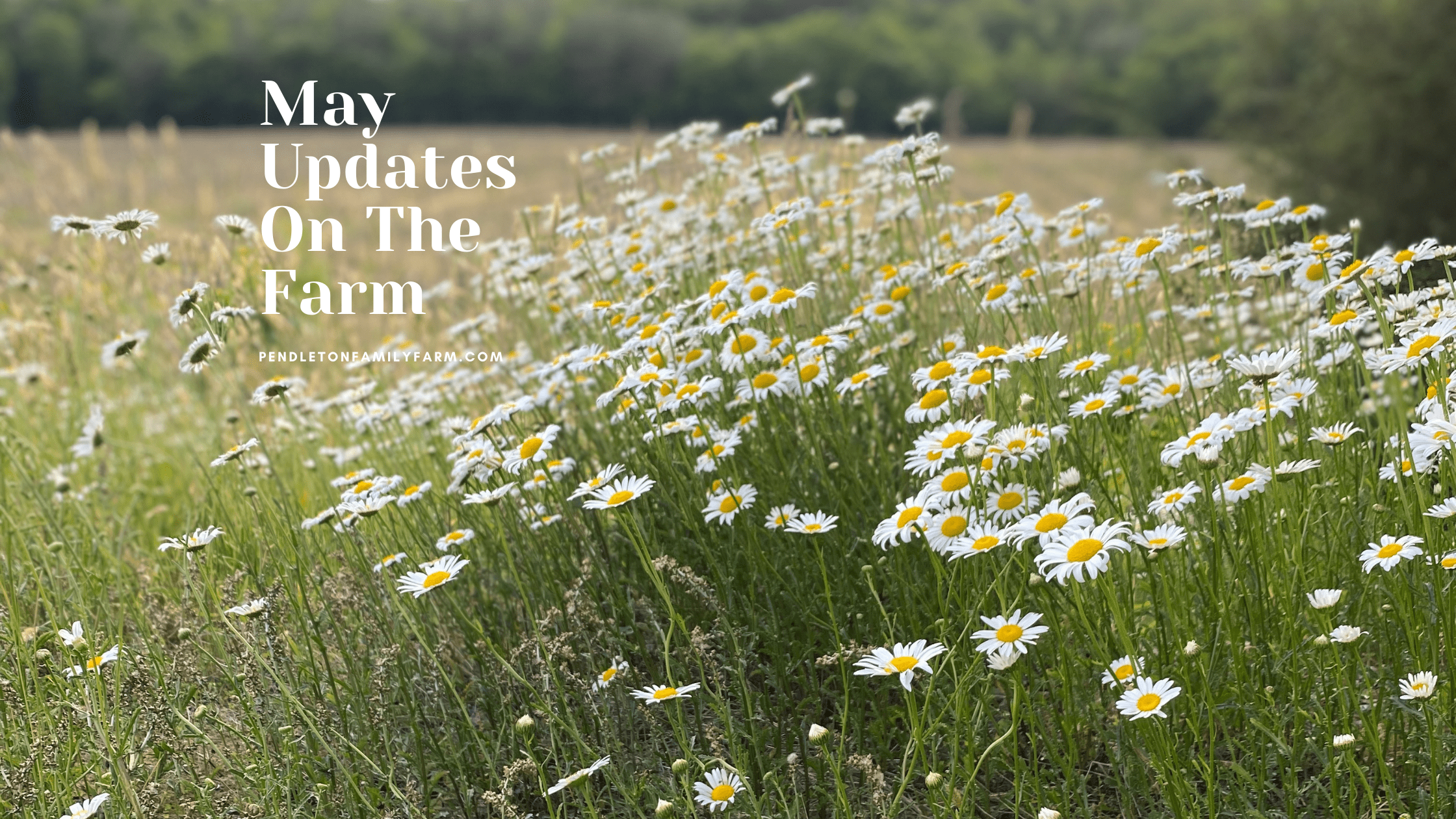 May Updates on the Farm