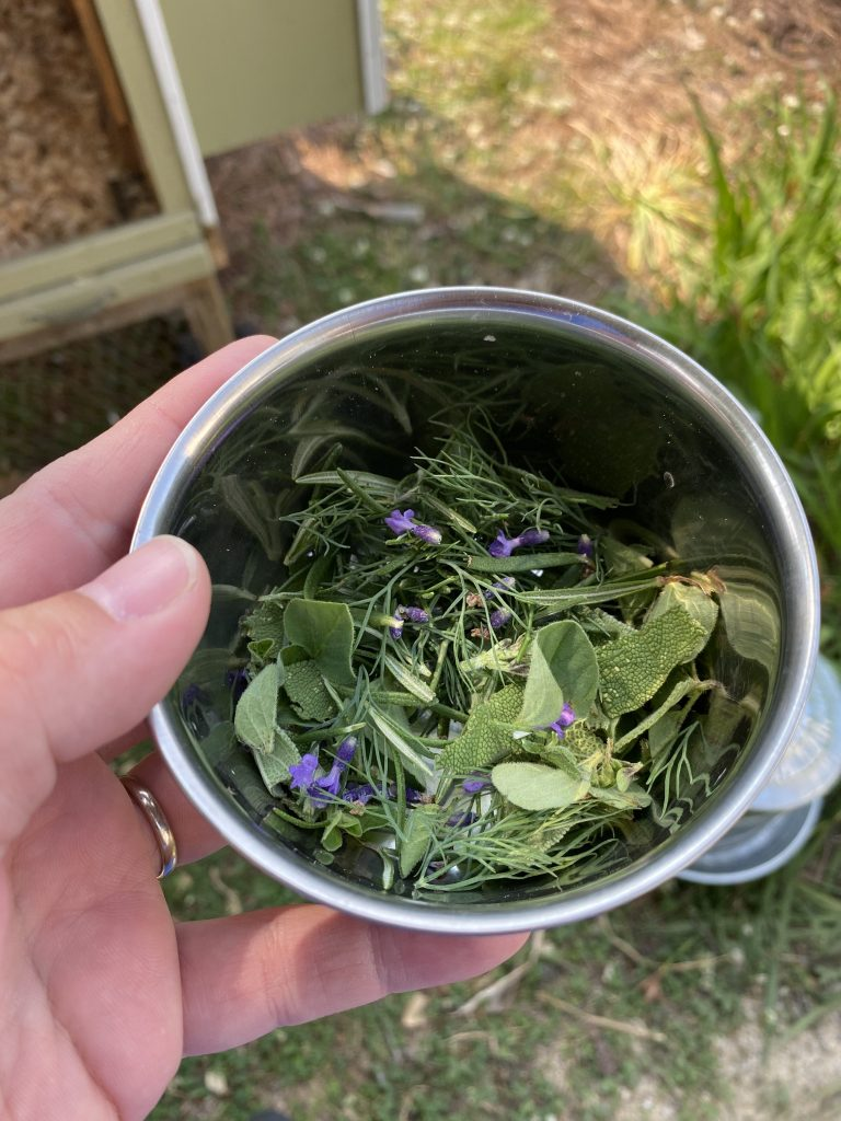 Fresh herbs picked for the chickens