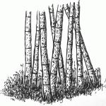 pen_ink_drawing_bamboo