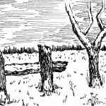 snow covered Wooden posts