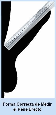como medir el pene correctamente