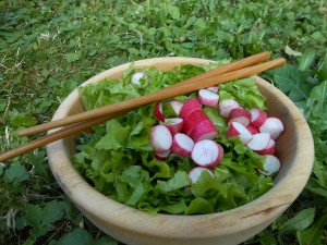 bol salade-radis