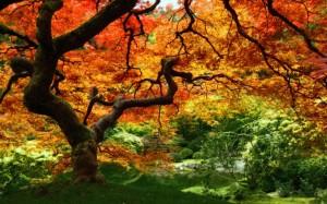 Belle-arbre-dautomne-foret-orange vert